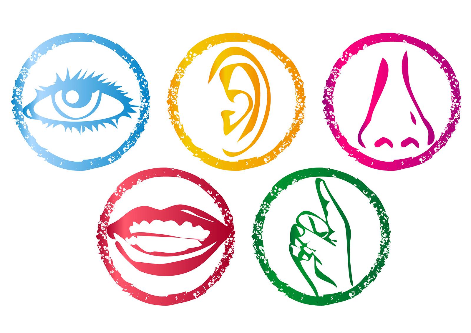 ligação entre os sentidos de tato e da audição
