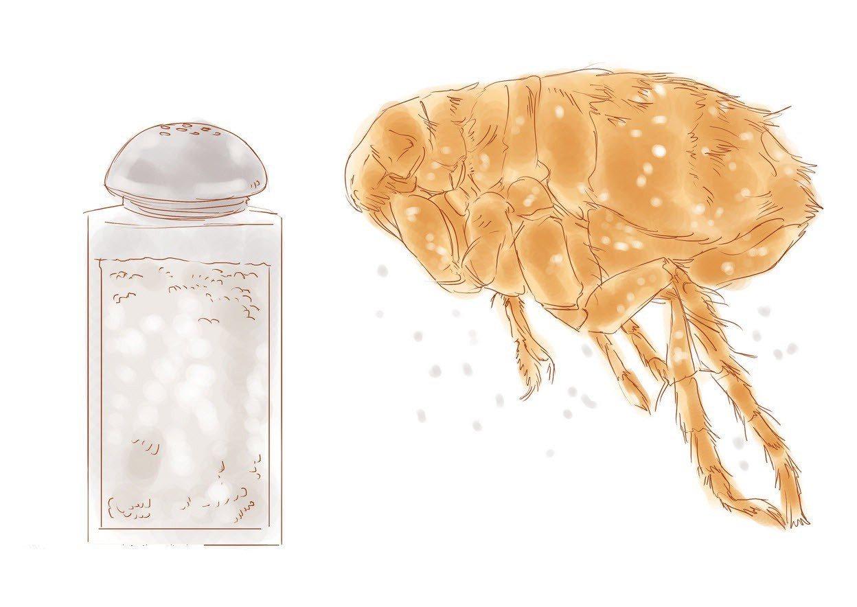 10 dicas caseiras para acabar com pulgas