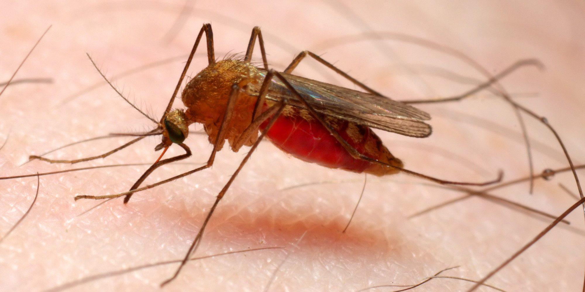 doenças tropicais malária