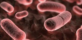 Peste Negra - Tipos, Causas, Sintomas e Prevenção