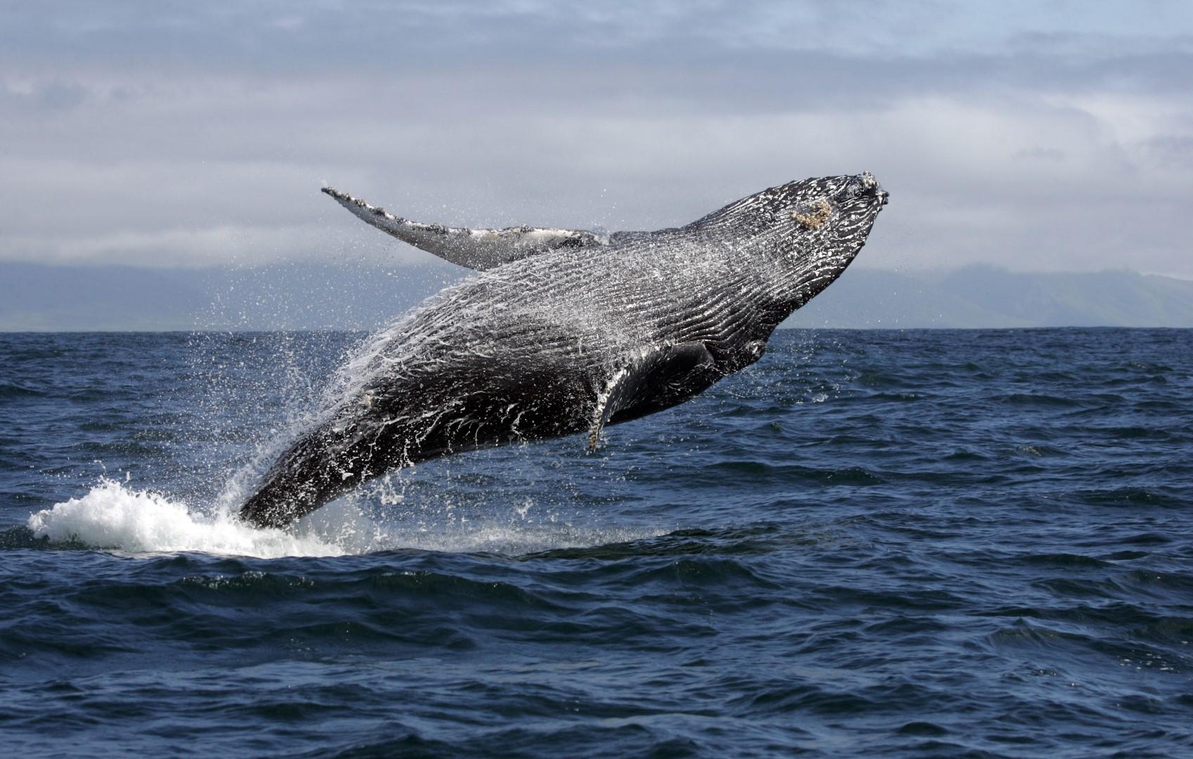 passeios em porto seguro - biosom baleia
