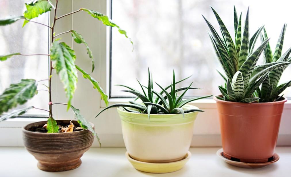10 Plantas que Purificam o Ar de Sua Casa