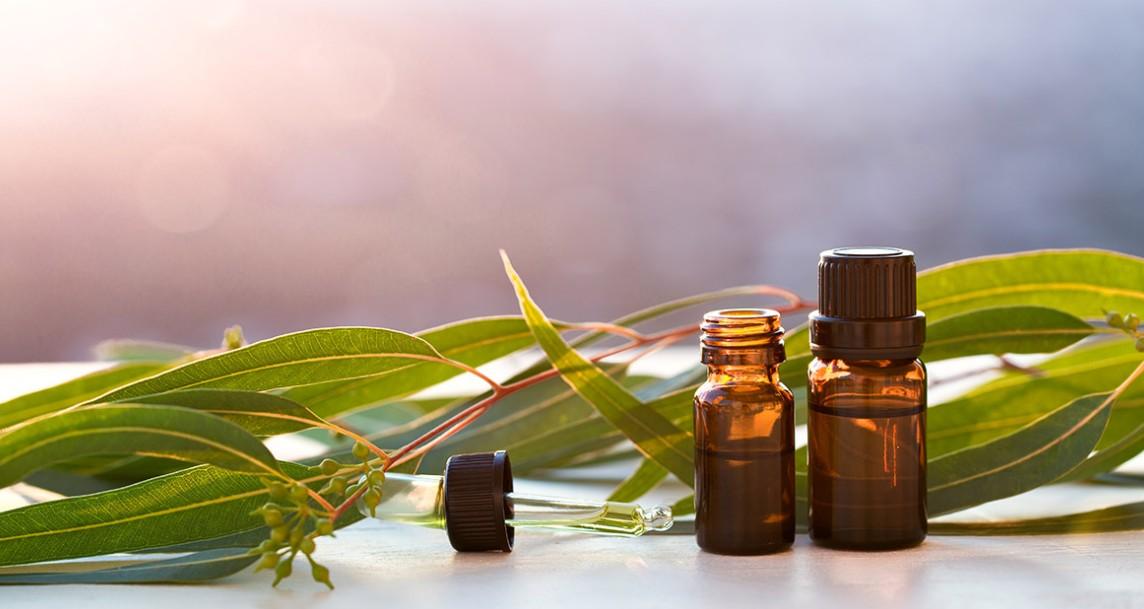 15 Benefícios Incríveis do óleo de Eucalipto para a Saúde